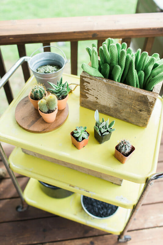 Cactus Party | how to make terrariums | spring party ideas | summer party ideas | ladies get together ideas | women's event ideas || JennyCookies.com #ladiesparty #terrariums #summerparty